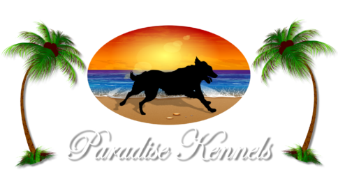 Paradise Kennels